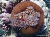 Nemo found again