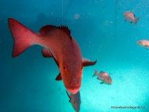 Fluorescent fish