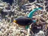 Brilliant turquoise fish